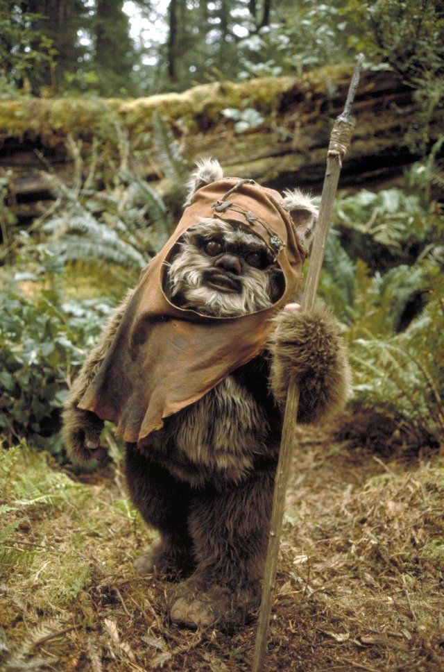 Princess Leia: [to Wicket the Ewok] You're a jittery little thing, aren't you