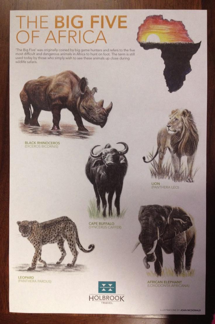 Africa's Big 5 Game Animals