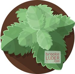 Mint | Flat Vector Art Illustration | Herbs & Spices by Brooke Luder | www.brookeluder.com