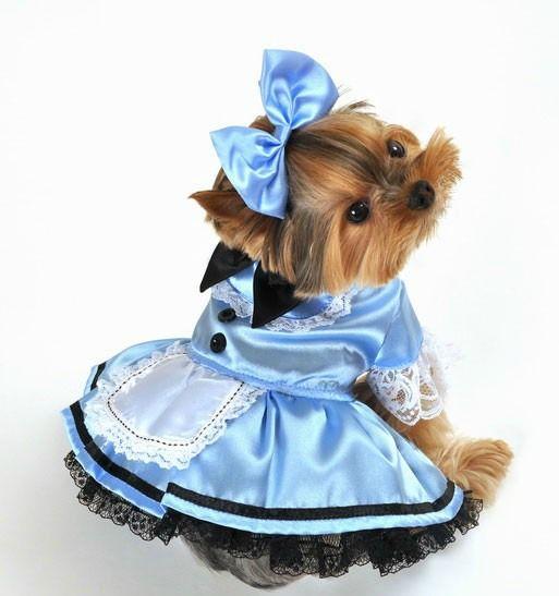 Alice In Wonderland Disfraces para perros