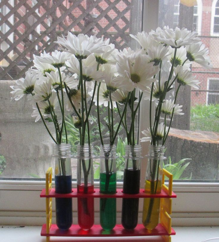 A wonderful science experiment.  Changing the colors of the flowers with different colored water.