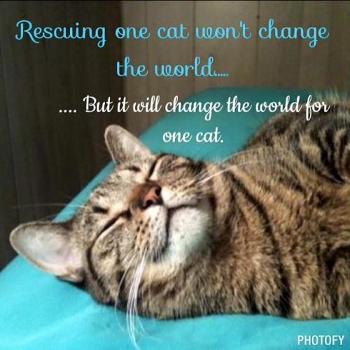 Rescuing one cat won't change the world...but it will change the world for one cat...please consider giving one or more-a forever home. <3