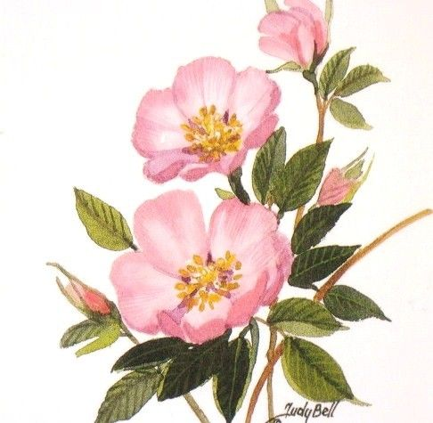 THIS IS THE ONE!!!! Prairie Rose Pink Wildflower Watercolor Painting Print as a shoulder tattoo