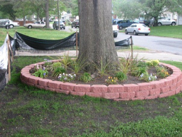 Low retaining wall around tree with slope in yard for Tree landscaping ideas