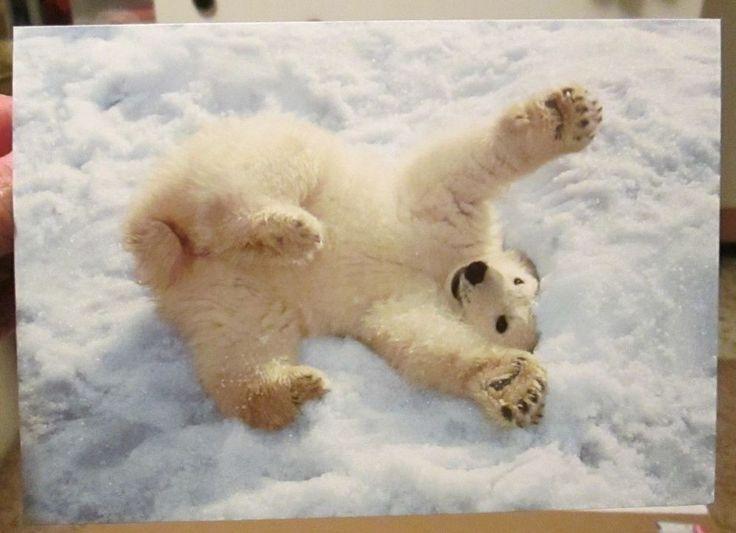 6 Pomegranate Sierra Club Christmas Cards Polar Bear Cub in Snow Mark Newman