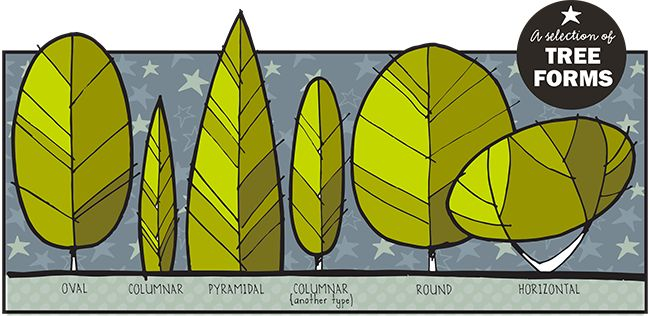 How to draw trees like a landscape designer, some quick tips.