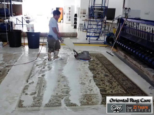 Cat Stain Removal The Walls in Miami