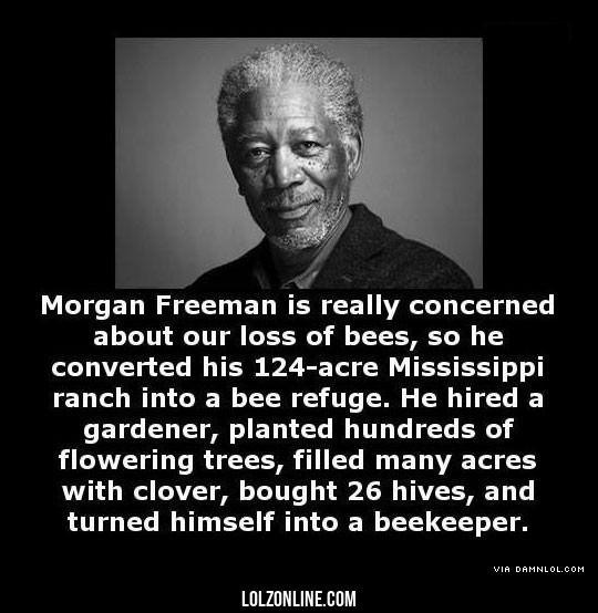 Good Guy Morgan#funny #lol #lolzonline