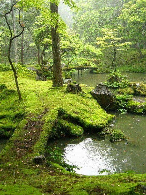 The garden of Saiho Ji in Kyoto, Japan.  -The LA Team  www.landarchs.com