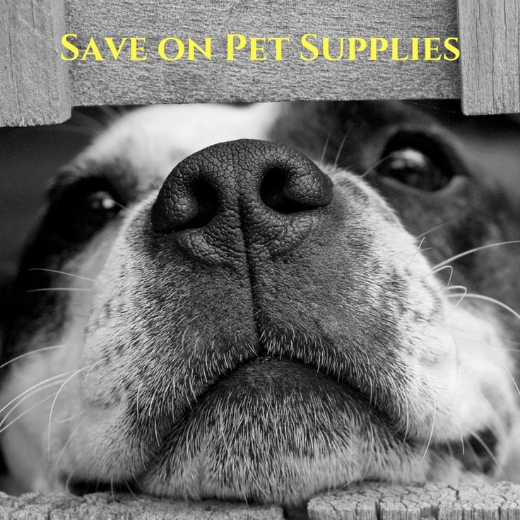 If you are running out of some of your favorite pet supplies, you should consider checking out PetFenceUSA.com. They have one of the largest selections of pet products online, so you are almost guaranteed to find what you are looking for, at competitive prices. On top of that, right now you can save 7% by using... visit us for more details!