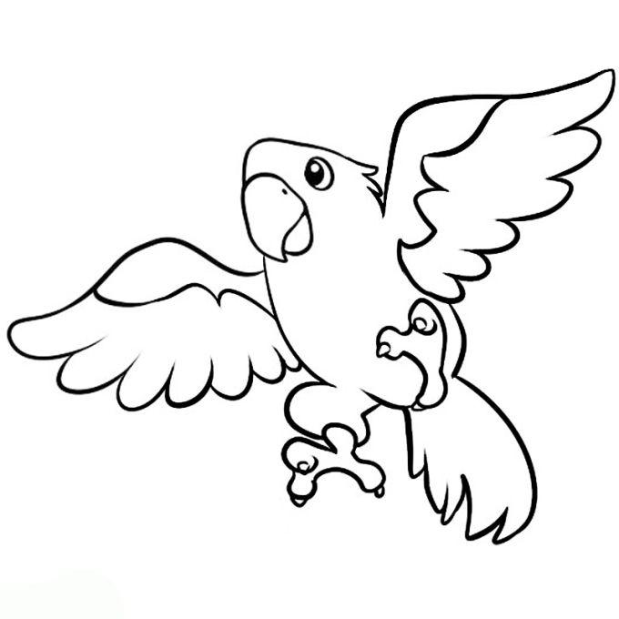 Papagei Bilder drucken ausmalen tiere cute basic simple ...
