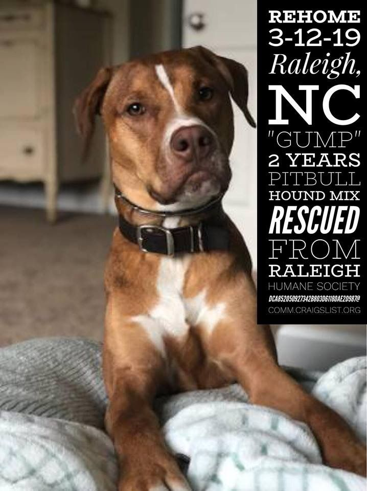 REHOME 3-12-19 #Raleigh, #NC