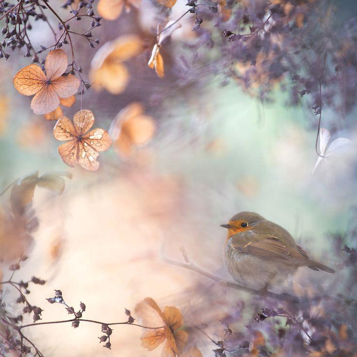 """""""Hydrangea fantasy"""" by Teuni Stevense, via 500px."""