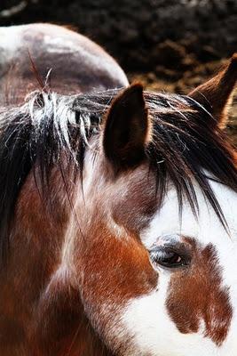 Rodeo Tales & Gypsy Trails...: Animal Lovers, Horses Things, Art Ideas, Pretty Horses, Horses God Beautiful, Beautiful Creatures, Painting Horses, Hors Things, Wild Horses