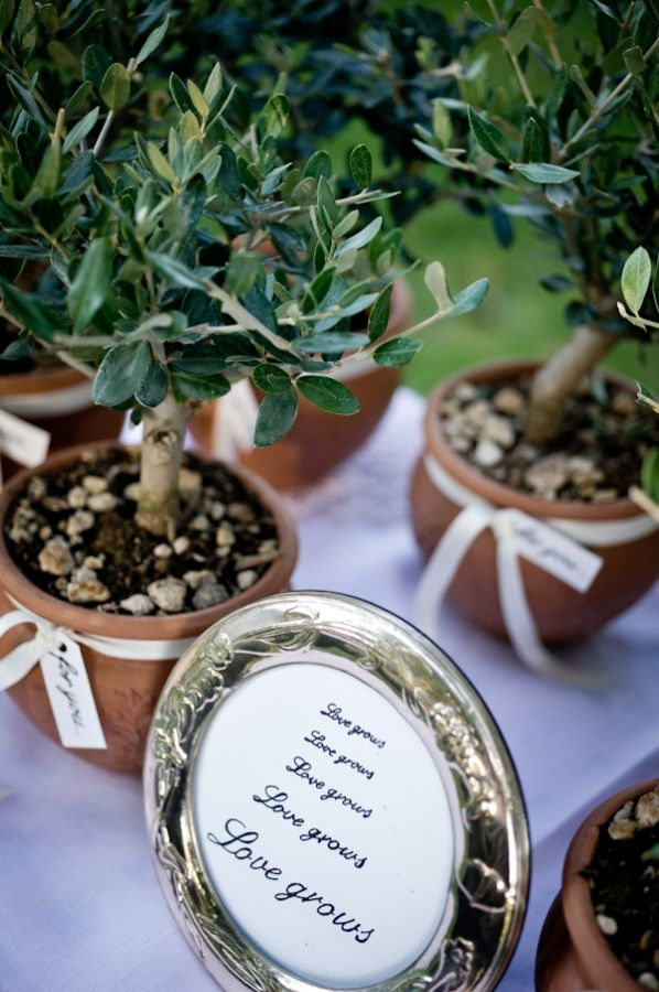 Amore, maybe we could give these to the family, and then watch them grow over the years! Adorable guest favors: Saplings in terracotta.
