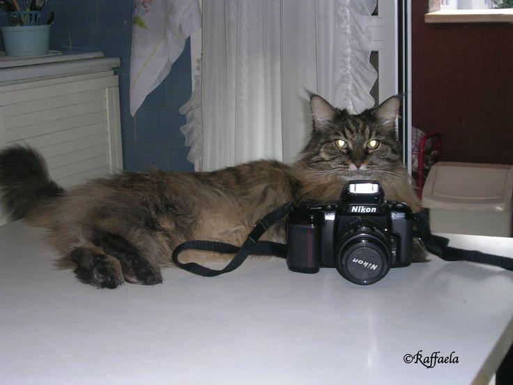 Professione Fotoreporter 1