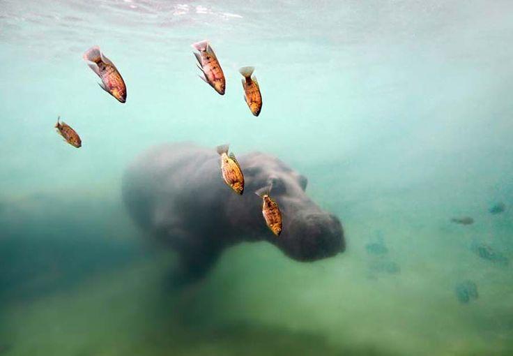 50 Fotos de peces exóticos colores de las Profundidades del