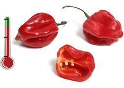 Pimentas Art | Habanero Red - 40 Sementes de Pimenta Habanero RED *Frete Grátis*