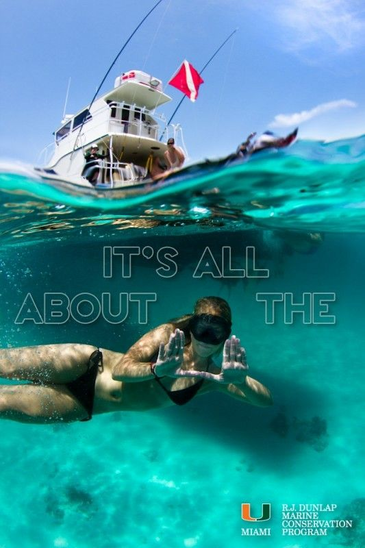 Discover Ideas About Marine Biologist Salary