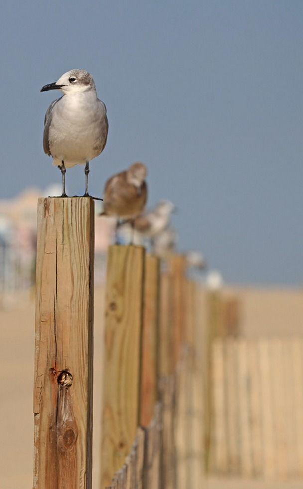 Seagulls @ The Beach