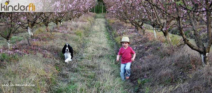 Kinderfli Boy and Dog in Orchard