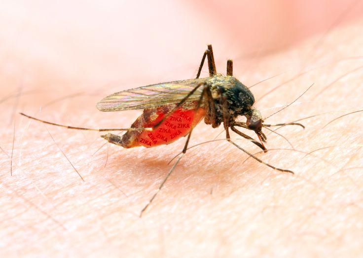 Zika un cas de transmission par les larmes - TopSanté