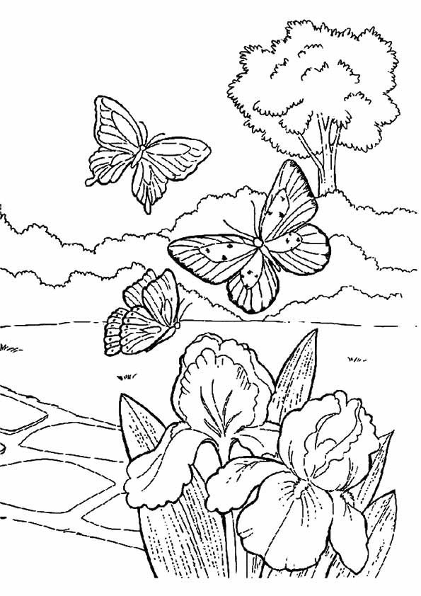 Pin By Ghamar Teypoor On بی In 2020 Butterfly Coloring Page Spring Coloring Pages Spring Coloring Sheets