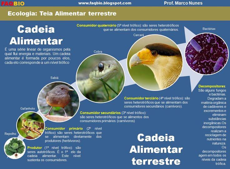 Resultado de imagem para cadeia alimentar TERRESTRE 6 exemplos