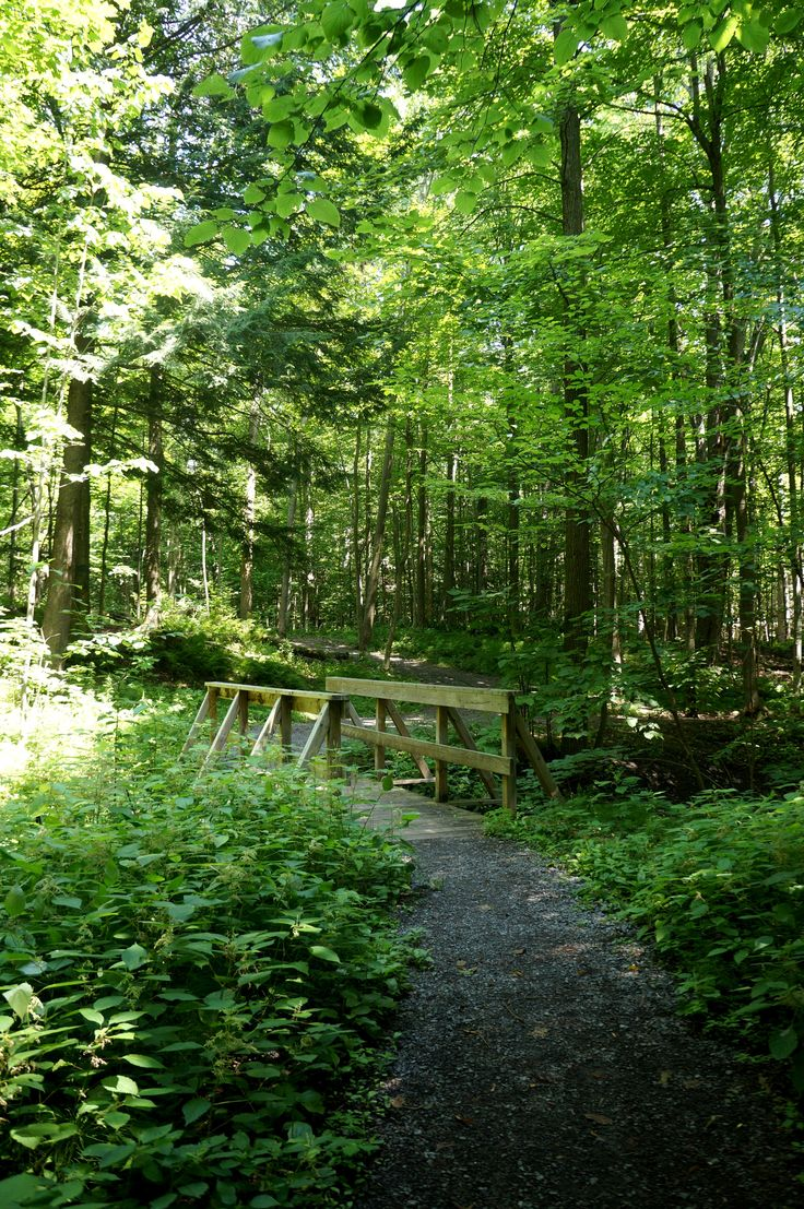 J Henry Tweed Park in #Russell, Ontario is perfect nature trail that you can even bring your four legged friends on. It is located just off Forced Rd, but there is also an access point just off the New York Central Trail Bike Path. Lots of beautiful nature all around!