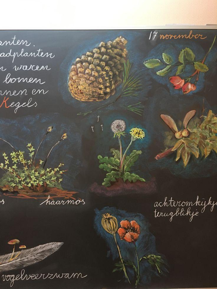 Botany beauty
