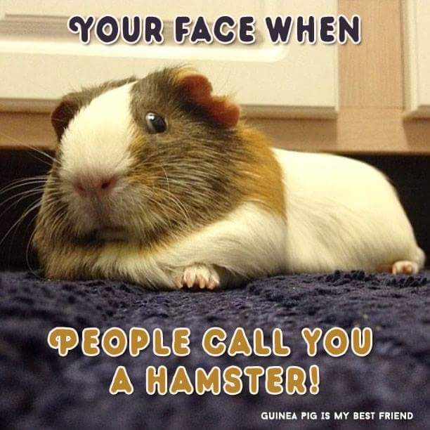 Your face when people call you a HAMSTER.