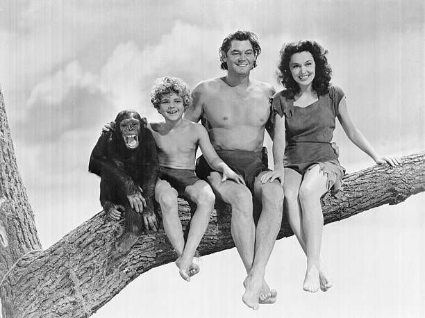 Left to right are Cheetah the Chimp Johnny Sheffield as Boy Johnny Weismuller as Tarzan and Maureen O'Sullivan in an undated publicity still The...