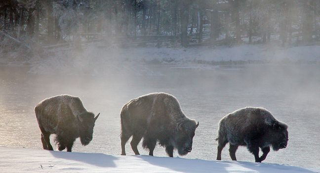 Yellowstone National Park Travel Guide - Expert Picks for your Yellowstone National Park Vacation   Fodor's
