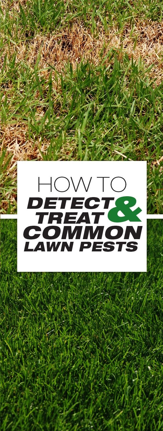 best 25 lawn mowing business ideas on pinterest mowing grass