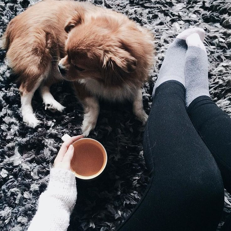 Rainy day  Coco and I love snuggling when is really cold! Did you read my latest post? #linkinbio