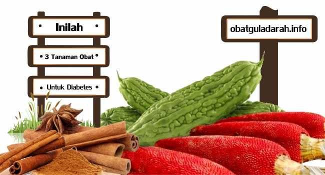Gula Darah : Tanaman Obat Untuk Diabetes - Tanaman Obat Untuk Gula Darah - Indonesia merupakan tempat yang kaya akan aneka ragam tanaman obat. Tanaman obat adalah tanaman yang memiliki khasiat obat..