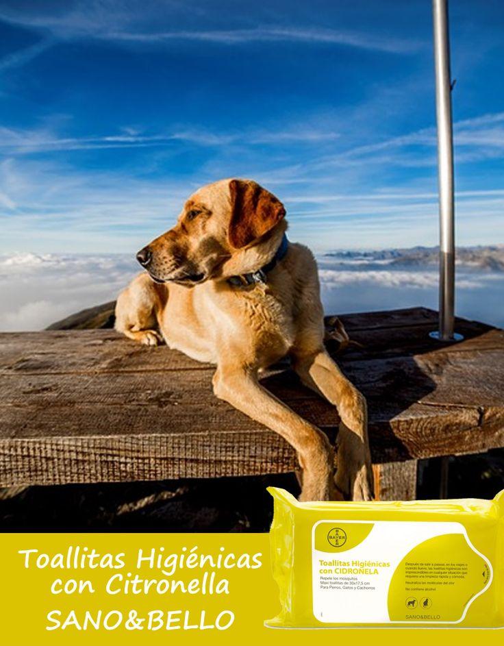 Haz que se refresque con las toallitas higiénicas de Citronella (repelente de mosquitos). #perros #dogs mascotas #pets #perrosconestilo #sanoybello #suplementos #perrosconenergía #amoamiperro #vitaminas #fósforo #calcio