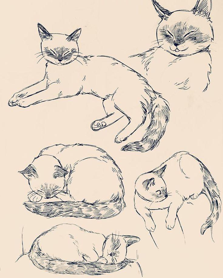 картинки туториалы коты модели суть кадров