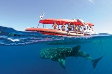 Perth Scuba Diving with Dolphin Dive fremantle WA
