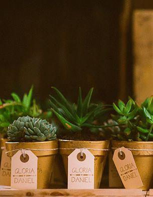 gold pot succulent favors + vintage tag ties.