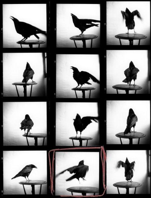 Raven Contact (1996-2010) Keith Carter