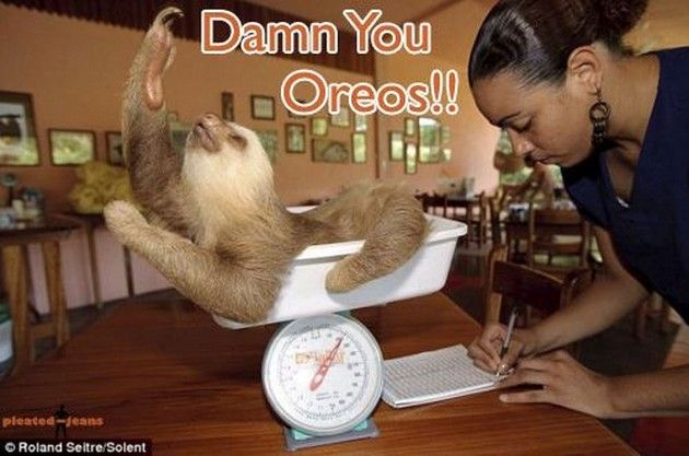 The Best of Sloth Memes (16 Pics)