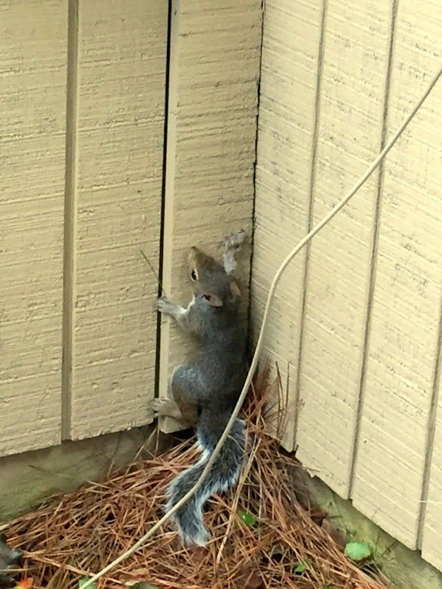 1000 Images About Squirrel Deterrent On Pinterest