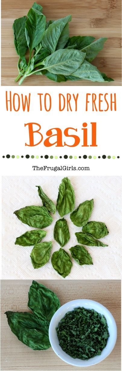 How to Dry Fresh Basil! ~ from TheFrugalGirls.com ~ Did you know that making your own dried herbs is ridiculously easy and SO delicious?  Learn how to make dried Basil with this simple trick!
