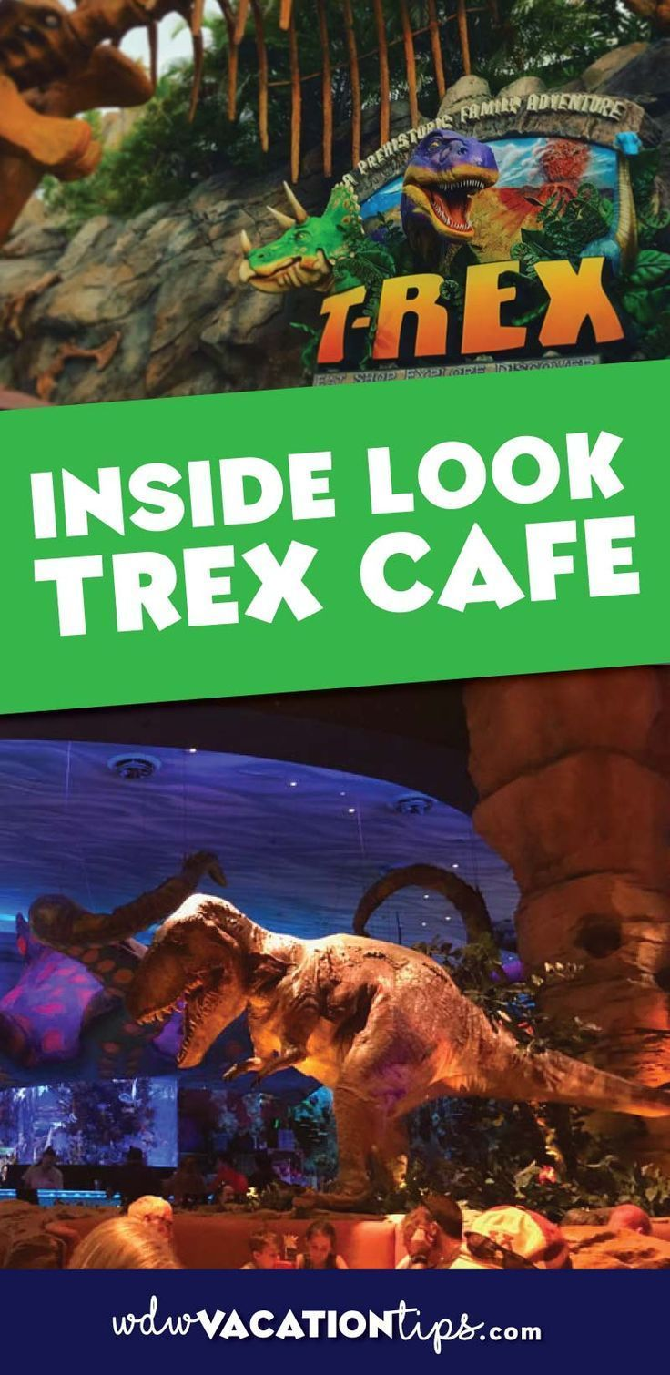 Disney World Restaurants | What to expect if you are planning on or thinking about eating at T-Rex Cafe at Disney Springs in Disney World.
