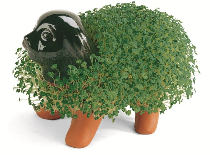 Buy Chia Pet Dog Costume