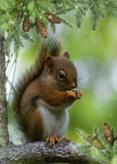 Белка ест орех гифка, для теме открытки