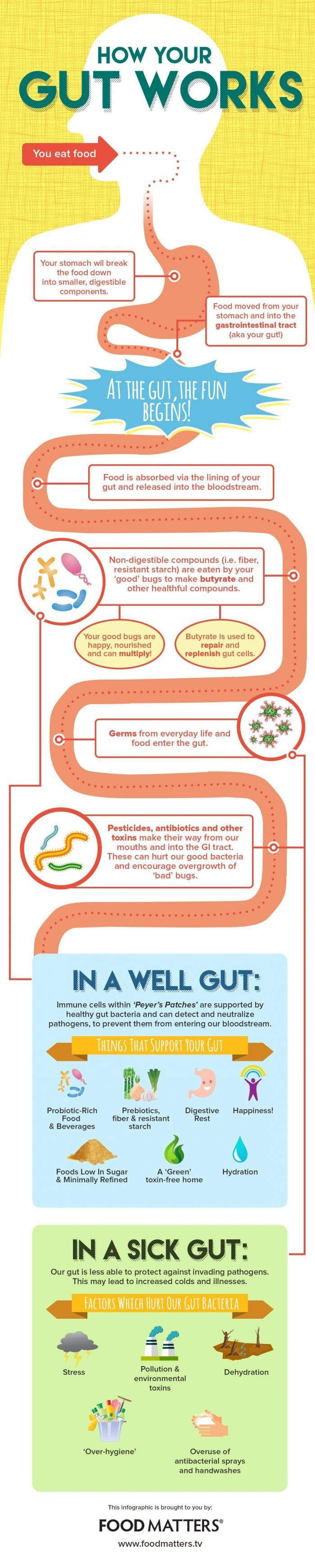 The differences between a sick gut and a healthy gut. Which one is YOUR gut? #guthealth #probiotics #prebiotics #microbiomes