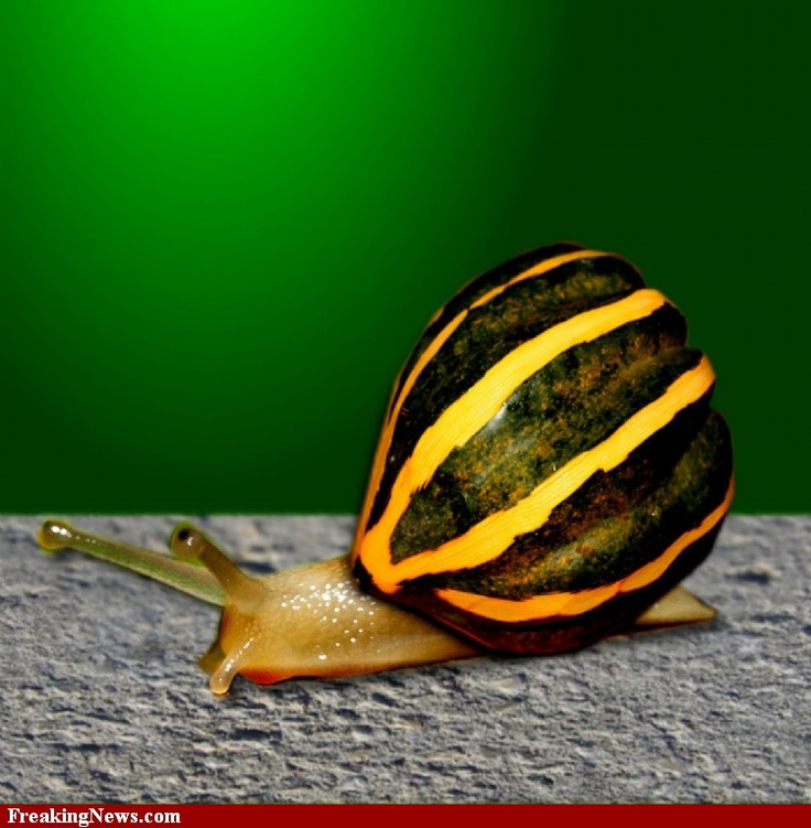 Best Snail Images On Pinterest Snails Nature And Shells - Frog wearing two snails as hat becomes star of hilarious photoshop battle