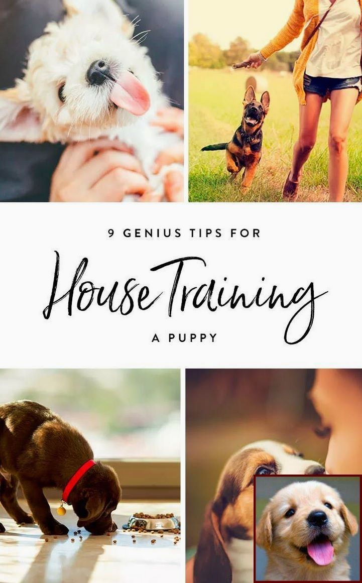 1 Have Dog Behavior Problems Learn About Dog Like Behavior In Cats And Dog Training Classes Petco House Training Puppies Puppy Training Training Your Puppy